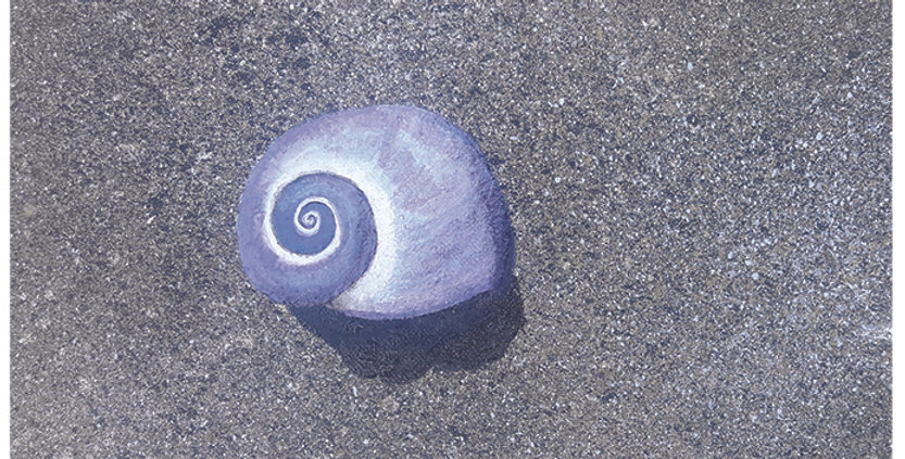 Purple Shell Card