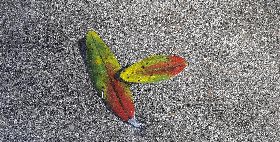 Pohutukawa Leaves