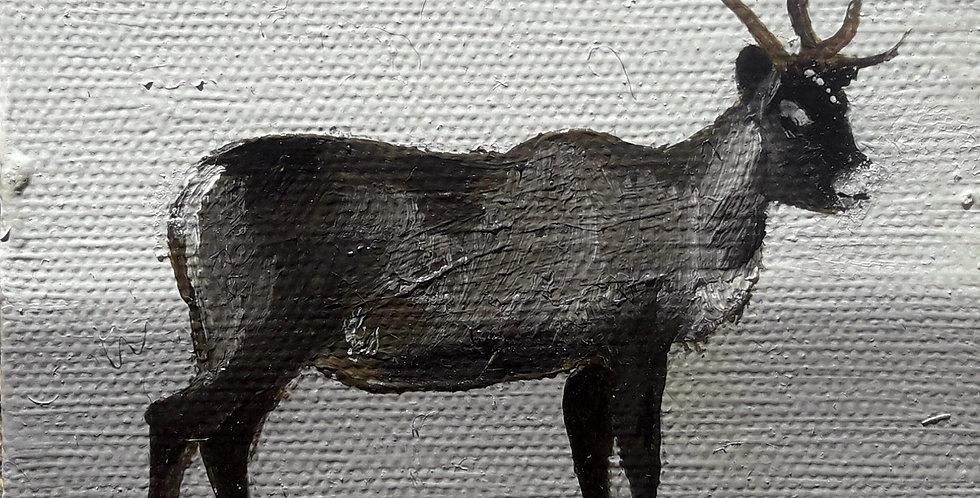 Reindeer for Xanthia