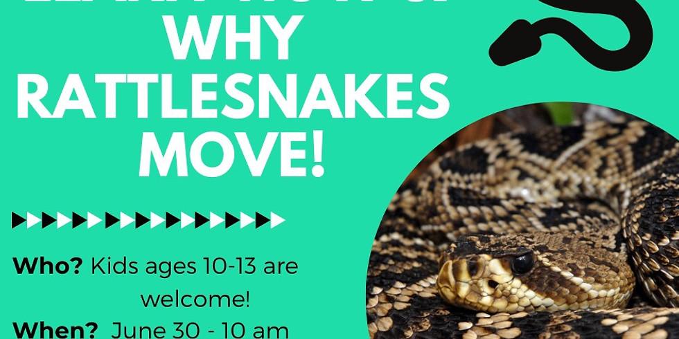 Virtual Class - Rattlesnake Movements