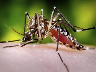 Lâmpadas de LED podem proteger pessoas do mosquito da Dengue e da Malária
