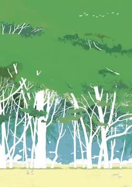 白的树杆.jpg