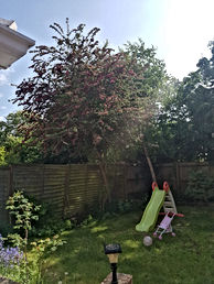 Tree BF.jpeg