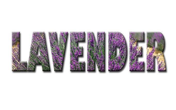 lavender-1768859_1920.jpg