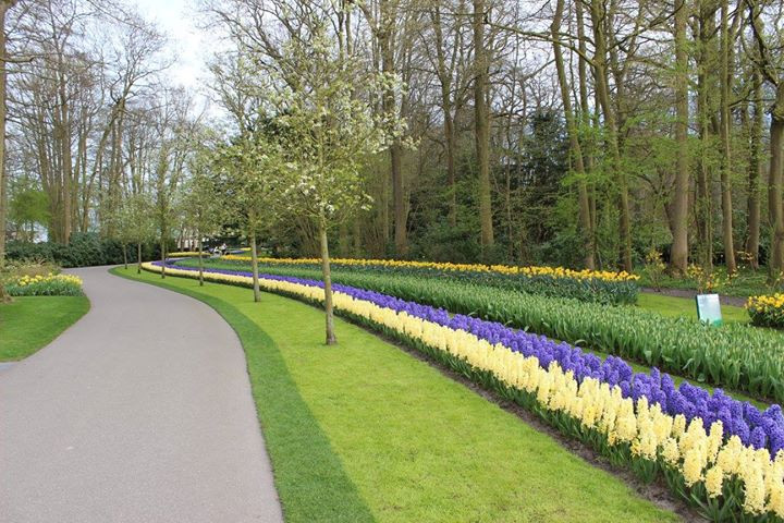 Pathway and Tulip lanes