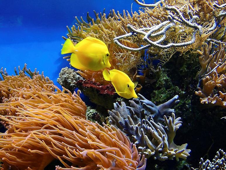 coral-1355474_960_720.jpg
