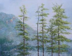Morning Mist on Mooselamoo
