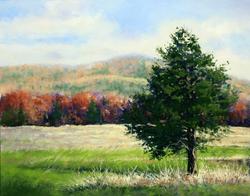 Evergreen in Fall