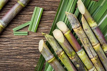Pt_sugarcane.jpg