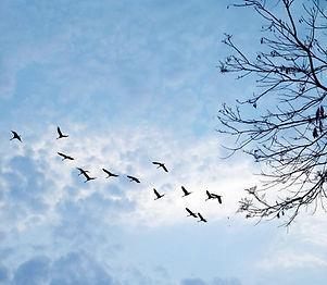 wix birds flying.jpg