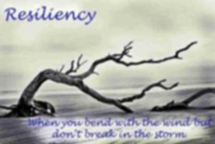 wix resiliency 4.jpg