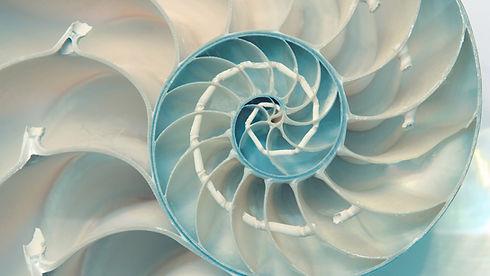 wix fractal patterns.jpg