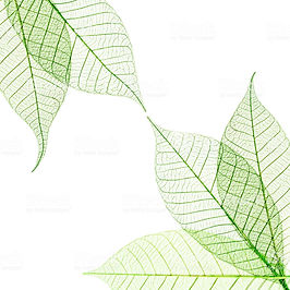 wix soft focus leaves.jpg