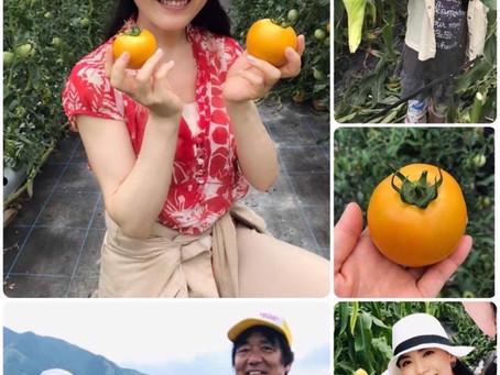 【 🌽 🌽 とうもろこし狩り 🌽🌽】 旬のトマトも絶品🍅笑いの絶えない 寺田農園へ✨
