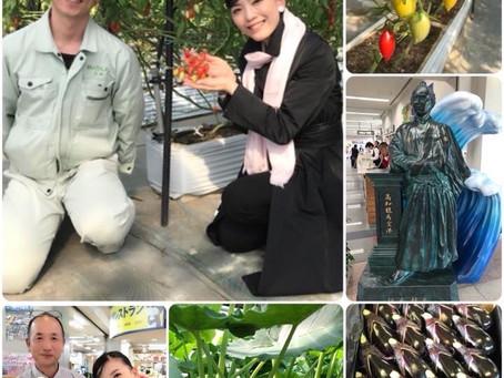 【弾丸!野菜ツアー🍅】高知県に来ています!