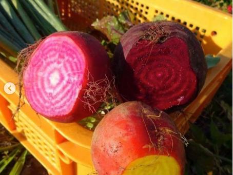 「奇跡の野菜」と呼ばれているほど栄養価が高いお野菜「ビーツ」