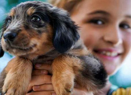 ¡Sí! Adoptar un perro es positivo si tienes niños en casa