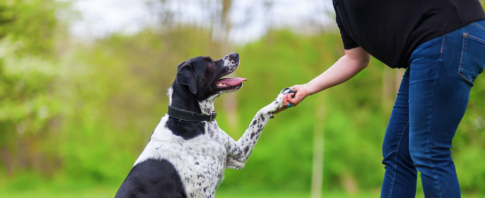 mixed breed dog gives a woman the paw_edited.jpg