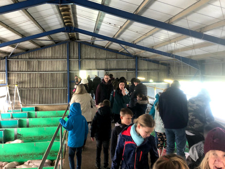 Easton College Lambing weekend