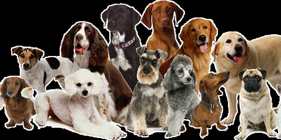 SedgePAW Dog Show at Wembdon Village Day
