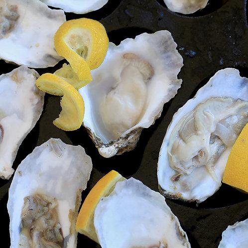 Chesapeake Bay, Great Shellfish Oysters