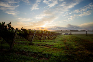 A Toast to Virginia's Eighth AVA and the Williamsburg Winery for Making it Happen