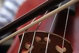 Cello Close-up