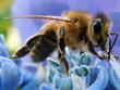 big+bee.png