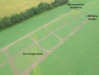A new point of view: crop scouting with aerial NDVI