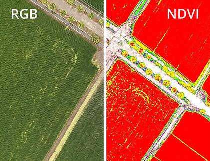 Section-RGB&NDVI.jpg