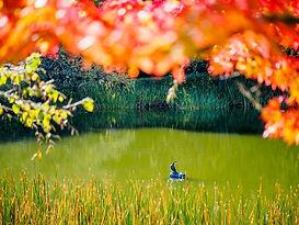Autumn%202_edited.jpg