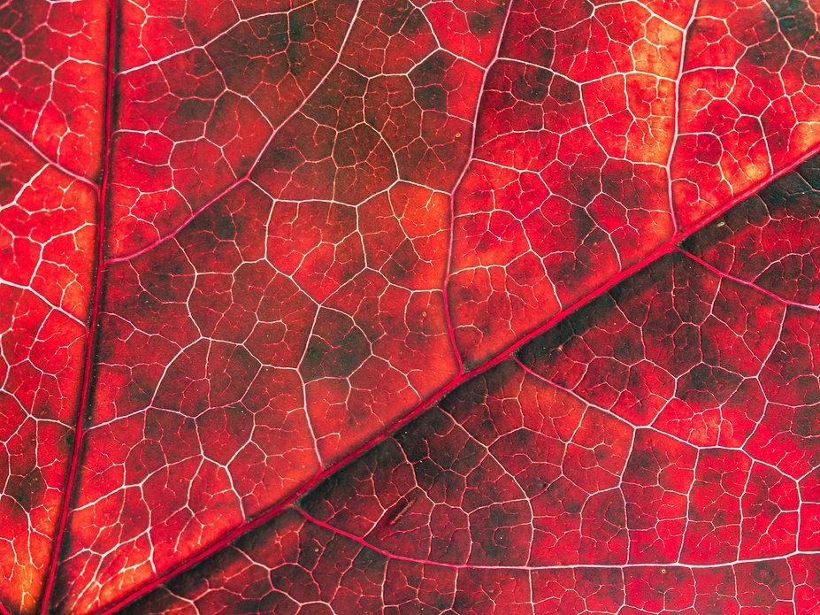 Autumn 10.jpg