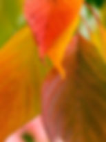 Autumn%206_edited.jpg