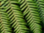 Leaves%201_edited.jpg