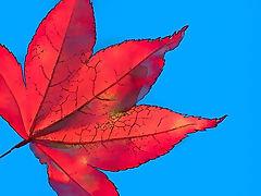 Autumn%2013_edited.jpg