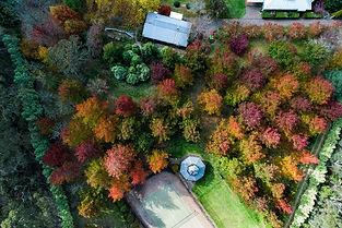 Autumn%2021_edited.jpg