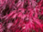 Autumn%204_edited.jpg