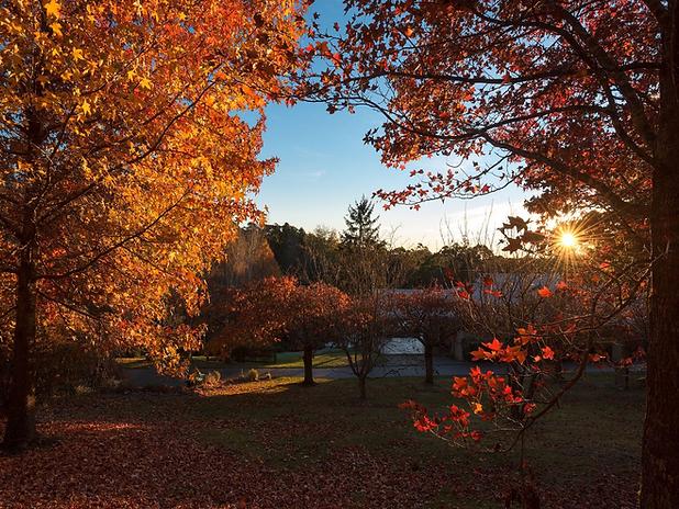 4- Dantosa Location - Garden in Autumn.p