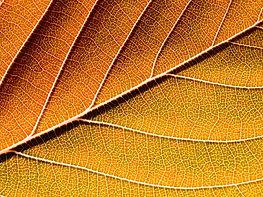 Autumn%208_edited.jpg