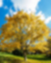 Autumn%207_edited.jpg