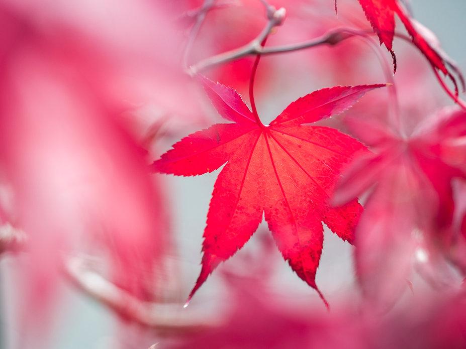 Autumn 11.jpg