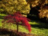 Autumn%2017_edited.jpg