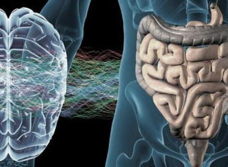 A importância do 2º Cérebro
