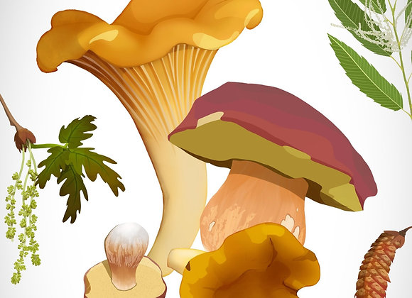 Girolles&Cèpes > Ile-de-France (Départements 75, 77, 78, 91, 92, 93, 94, 95)