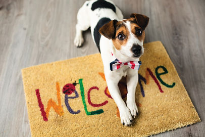 17-03-Dog-Owners-Extend-Carpet-Life_7311