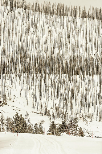 dead-trees-from-a-forest-fire-tim-martin_edited.png