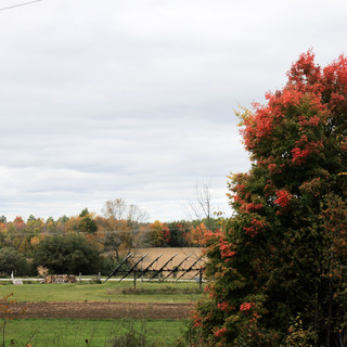 Autumn at Mother's