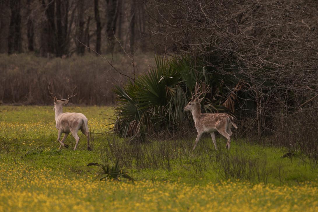 Green Briar Ranch-210.jpg