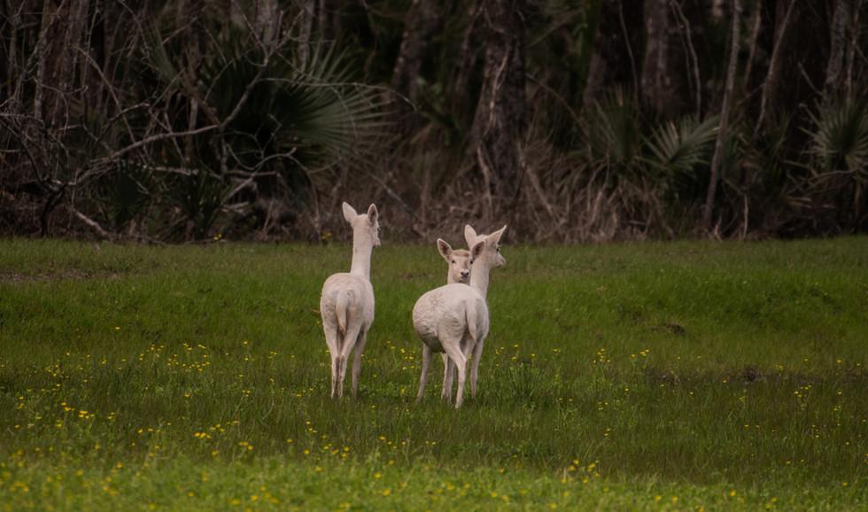 Green Briar Ranch-136.jpg