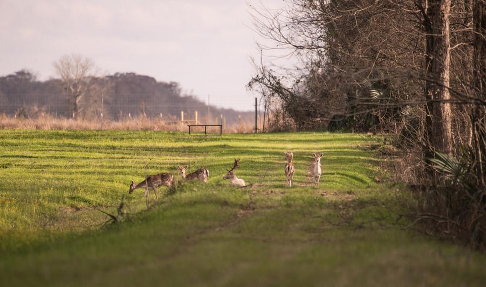Green Briar Ranch-195.jpg